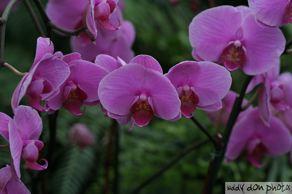 Orchid Show at New York Botanical Garden